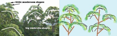 leaf-shapes